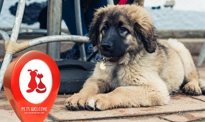 PURINA Pets Welcome - lugares pet-friendly